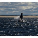 Newcastle Whale Watch Cruise
